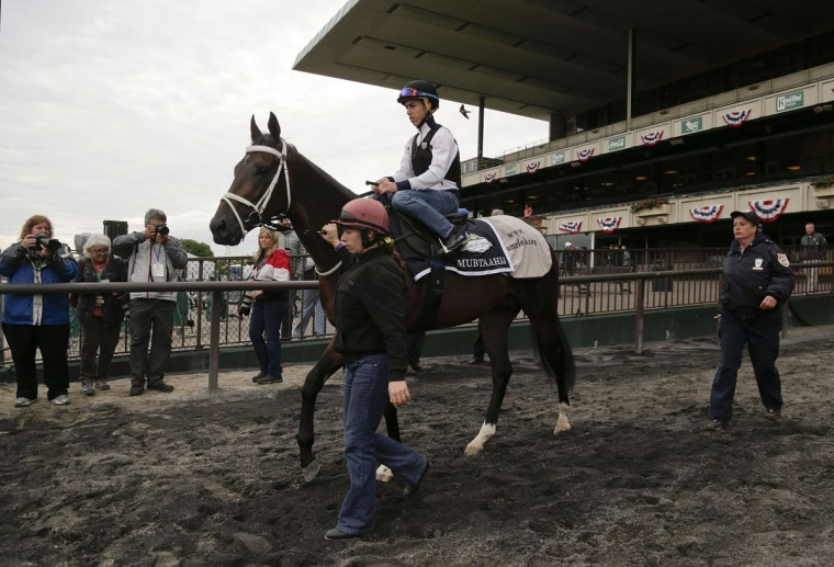 Mubtaahij is led onto the track for a workout at Belmont Park, Thursday, June 4, 2015, in Elmont, N.Y. Mubtaahij is entered in Saturday's 147th running of the Belmont Stakes horse race, when American Pharoah will try for a Triple Crown. (AP Photo/Julie Jacobson)