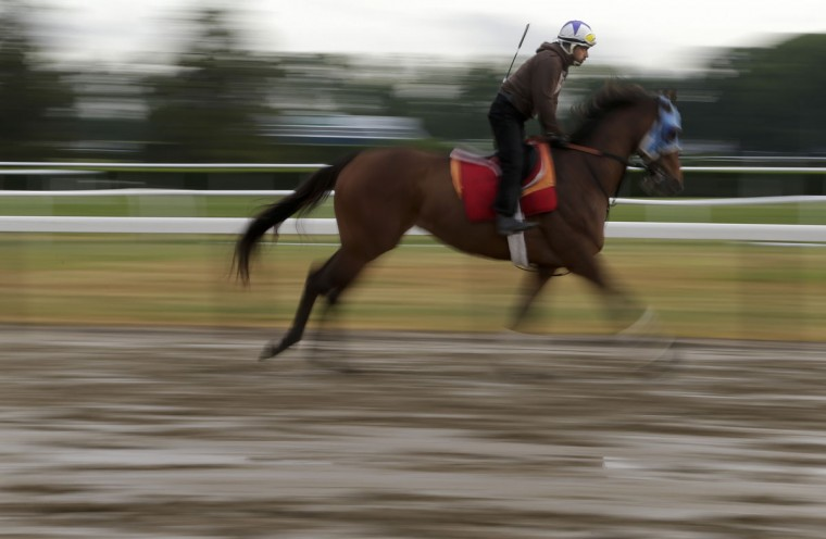In this image taken with a slow shutter speed, an exercise rider takes a thoroughbred around the track during a workout at Belmont Park, Wednesday, June 3, 2015, in Elmont, N.Y. Kentucky Derby and Preakness Stakes winner American Pharoah will try for the Triple Crown when he runs in Saturday's 147th running of the Belmont Stakes horse race. (AP Photo/Julie Jacobson)