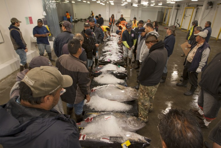 Buyers examine fish during an auction at United Fishing Agency in Honolulu, Thursday, June 18, 2015. Fresh fish arrive daily and are auctioned off to the highest bidders based on quality and market value. The auction is the biggest in the United States and one of the largest in the world. (AP Photo/Caleb Jones)