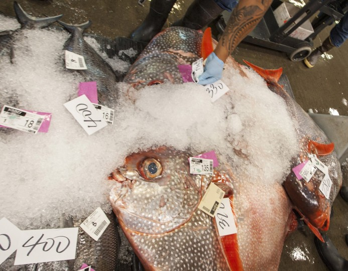 Fish are tagged after an auction at United Fishing Agency in Honolulu, Thursday, June 18, 2015. Fresh fish arrive daily and are auctioned off to the highest bidders based on quality and market value. The auction is the biggest in the United States and one of the largest in the world. (AP Photo/Caleb Jones)