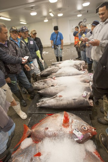 Buyers bid on fresh fish at United Fishing Agency in Honolulu, Thursday, June 18, 2015. Fresh fish arrive daily and are auctioned off to the highest bidders based on quality and market value. The auction is the biggest in the United States and one of the largest in the world. (AP Photo/Caleb Jones)
