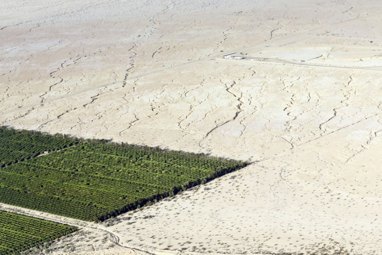 In this May 1, 2015, aerial photo, irrigated citrus trees sit surrounded by bone-dry land near Westmorland, Calif. The Imperial Valleyís half-million acres of verdant fields end abruptly in pale dirt that gets three inches of rain annually on average. (AP Photo/Gregory Bull)