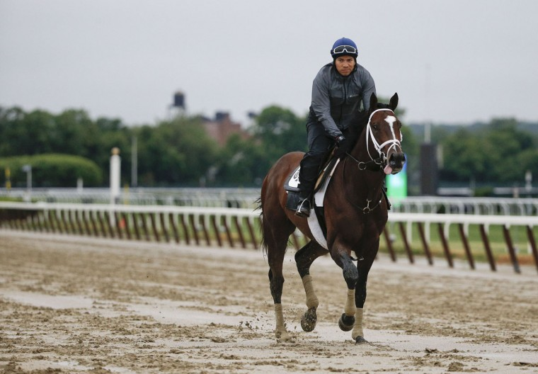 Belmont Stakes contender Materiality trots around the track during a workout at Belmont Park, Monday, June 1, 2015, in Elmont, N.Y. Materiality will be one of several contenders in Saturday's 147th running of the Belmont Stakes horse race, where Kentucky Derby and Preakness winner American Pharaoh will attempt to win a Triple Crown. (AP Photo/Julie Jacobson)