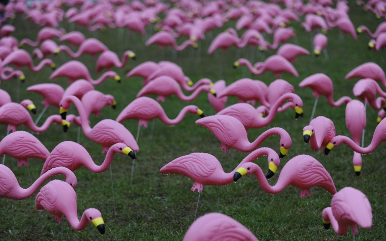Flamingos line the lawn at War Memorial Plaza on Fayette St. (Jed Kirschbaum/Baltimore Sun)