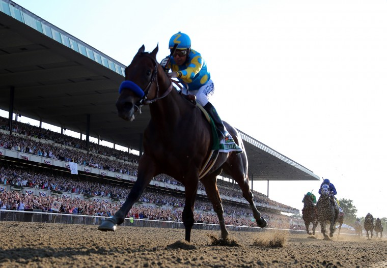 American Pharoah #5, ridden by Victor Espinoza, comes down the final stretch ahead of the field on his way to winning the 147th running of the Belmont Stakes at Belmont Park on June 6, 2015 in Elmont, New York. (Rob Carr/Getty Images)