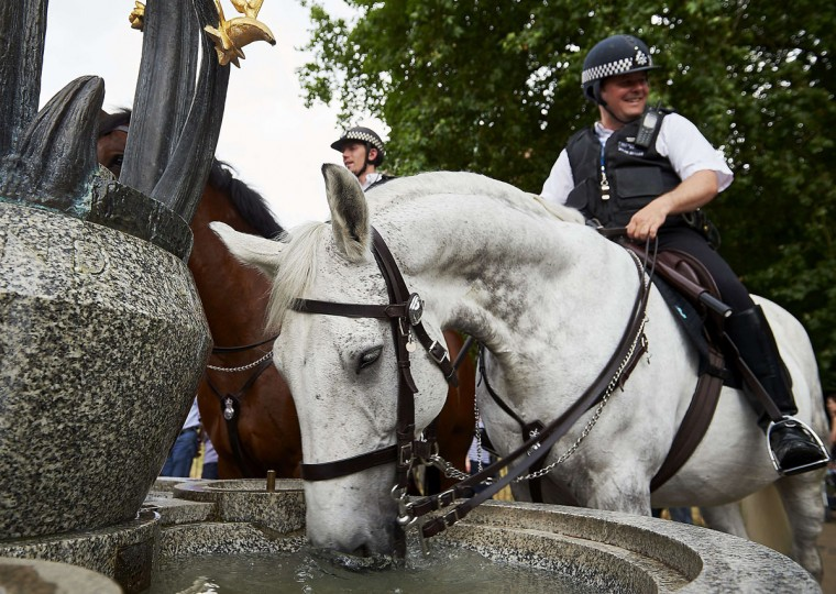 A police horse drinks from a water fountain in London's Green Park on July 1, 2015. The mercury was pushing 40C across much of northern Europe on Wednesday as the UN warned heatwaves were growing more frequent and intense due to climate change, and called on more countries to put warning systems in place to inform people of the dangers. (NIKLAS HALLE'N/AFP/Getty Images)