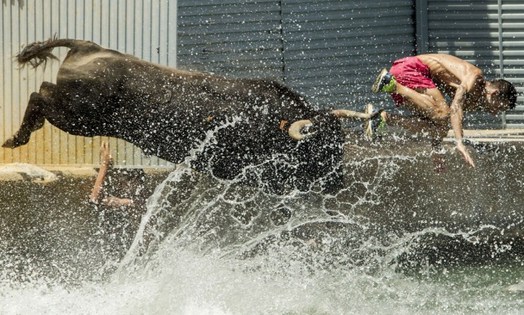 """A man and a bull jump into the water during the traditional running of bulls """"Bous a la mar"""" (Bull in the sea) on Denia's harbour, near Alicante on July 7, 2015. (JOSE JORDAN/AFP/Getty Images)"""