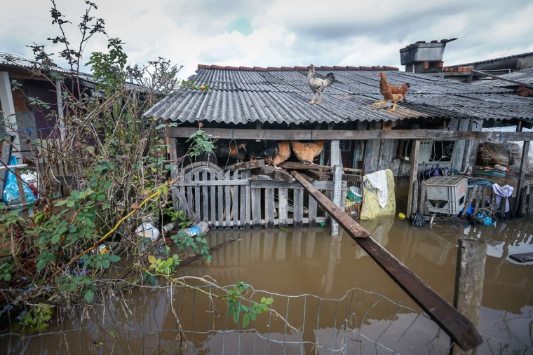 Chickens and dogs stay out of the water in the flooded neighborhood of Vila Rica, in Gravatai, southern Brazil, on July 21, 2015. (JEFFERSON BERNARDES/AFP/Getty Images)