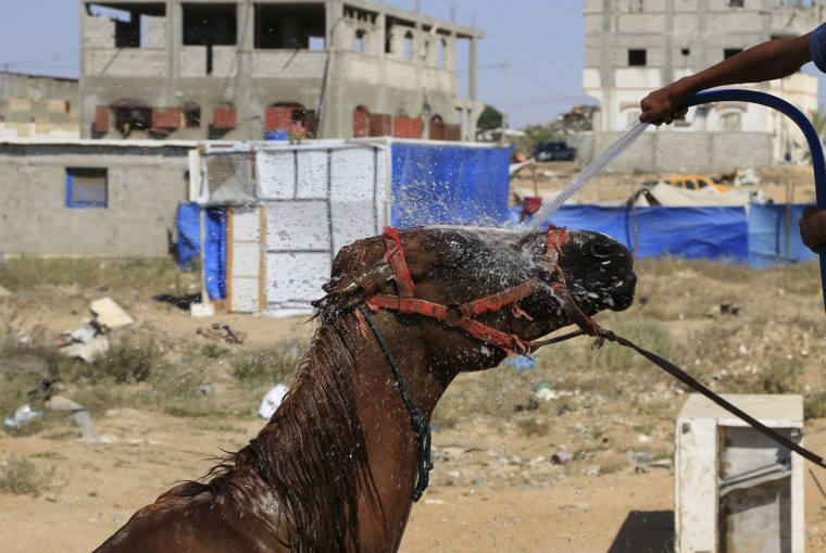 Mohammed al-Masri cools off his family horse near the ruins their house, which was destroyed in the last summer's Israel-Hamas war, in Beit Hanoun, in the northern Gaza Strip, Thursday, July 30, 2015, where the high temperature was 36 degrees Celsius (97F). Chronic electricity and water cuts in conflict-ridden countries make heat waves like the present one even more unbearable — particularly for the more than 14 million people displaced by violence across the Middle East region. (AP Photo/Adel Hana)