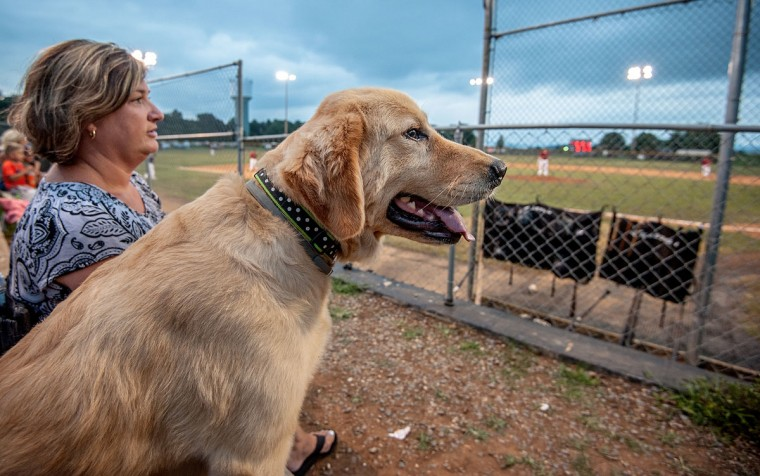 Denise Shiflet, and her dog Willow, watch the baseball game between the Bridgewater Reds and the Broadway Bruins at Bridgewater, Va., Ray Heatwole Field on Tuesday, July 28, 2015. (Daniel Lin/Daily News-Record via AP)