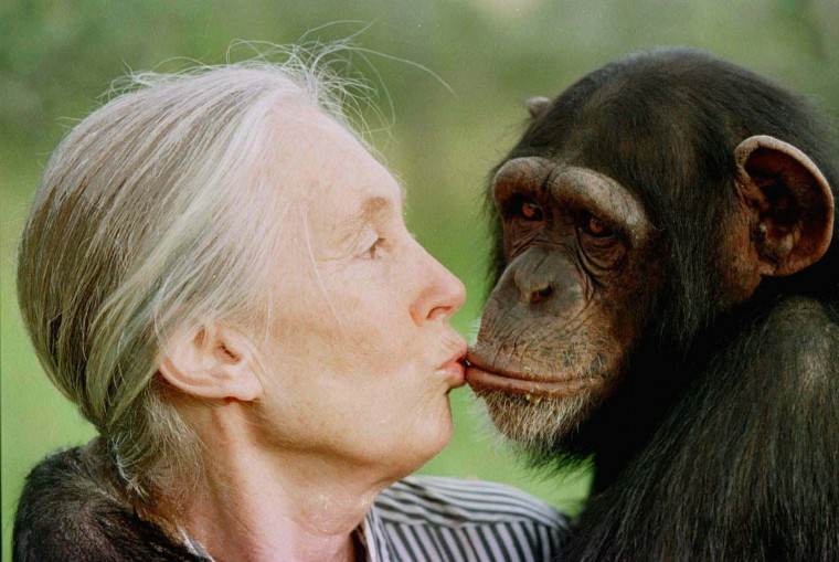 July 14, 1960: Famed chimpanzee studier Jane Goodall, seen here giving a little kiss to Tess in 1997, arrived at the Gombe Stream Chimpanzee Reserve in western Tanzania on July 14, 1960, where she began her historic research. (AP Photo/Jean-Marc Bouju)