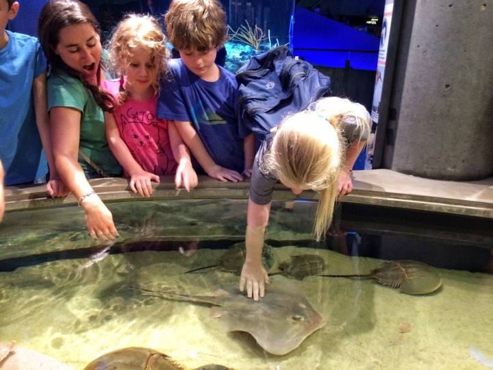 Quick tour through our newest exhibit, Living Seashore, where guests can actually touch the animals!