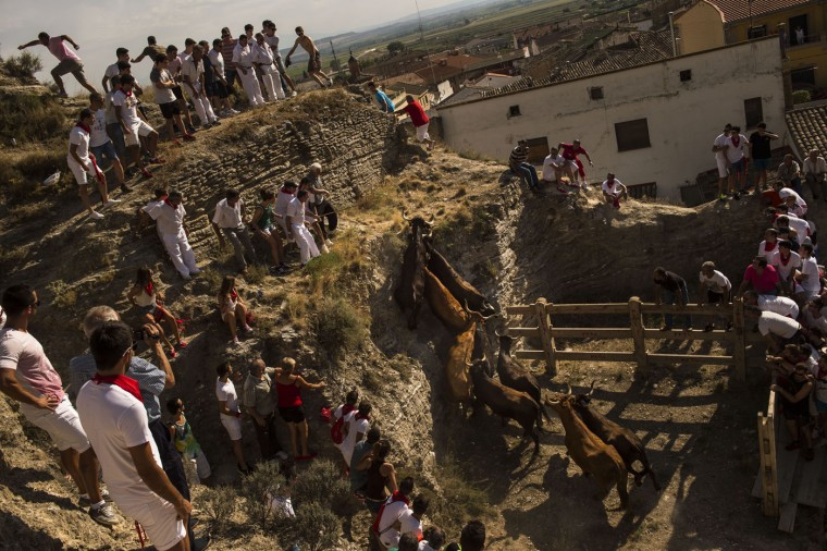 Villagers try to stop cows from walking too far up a slope of a mountain with the intention of sending them back down towards the town of Arguedas, northern Spain, Thursday Aug. 6, 2015. The traditional run during the local fiestas is in honor of the patron saint Esteban. (AP Photo/Alvaro Barrientos)