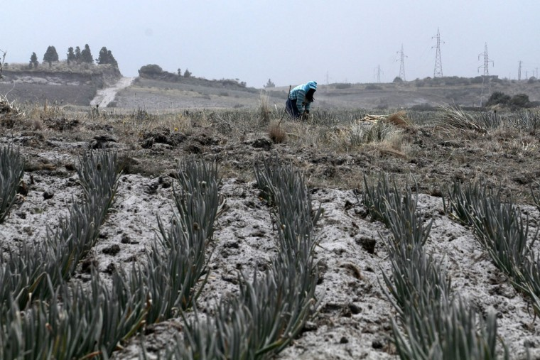 View of an onion plantation covered with ash of the Cotopaxi volcano in Machachi, Ecuador on August 22, 2015. Ash from Ecuador's Cotopaxi volcano rained down on a dozen villages in the country's central Andean region Saturday, where agricultural output has been marred by a blanket of soot from explosions that began a week ago. (JUAN CEVALLOS/AFP/Getty Images)