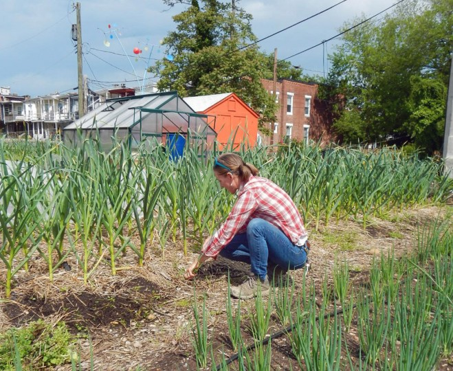 Elisa Lane, who started Whitelock Community Farm on an abandoned city lot in Reservoir Hill, is pictured on May 16, 2013. She grows and sells food to local residents, a corner store and even restaurants. She learned what she knows from the Master Gardener program under Baltimore City''s extension program, which would be cut out under the mayor''s budget plan. (Baltimore Sun photo by Susan Reimer)