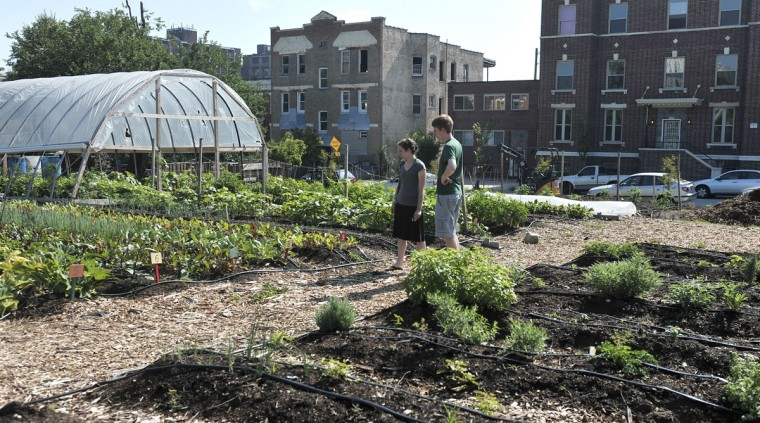 Candice and Matt Gormley survey the vegetable beds at the Whitelock Community Farm, at corner of Whitelock St. and Brookfield Avenue in Reservoir Hill on July 9, 2011. They are looking to move into the neighborhood. The farm is one third of an acre lot planted in 27 different vegetables. Several herbs are also grown there. (Kim Hairston / Baltimore Sun)