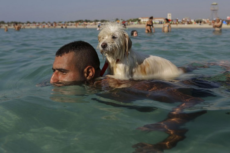 A dog named Lucky gets a ride on the back of his owner as the man swims at the beach of the southern port city of Tyre, Lebanon, Sunday, Sept. 20, 2015. (AP Photo/Hassan Ammar)