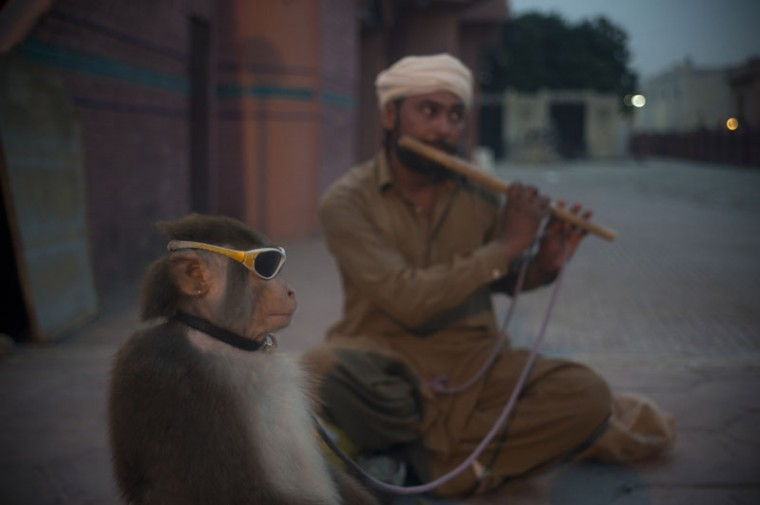 A Pakistani monkey handler Naseer Khan plays flute to attract passers by for a monkey show to earn his living in Islamabad, Pakistan, Monday, Sept. 7, 2015. (AP Photo/B.K. Bangash)