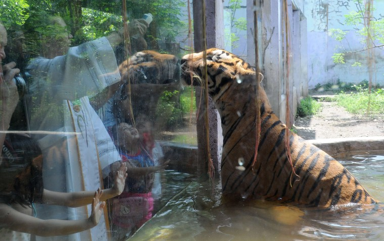A Roman Catholic priest (L) blesses an Asian tiger with holy water on the eve of World Animal Day at Malabon Zoo in suburban Manila on October 3, 2015. The day began in Florence, Italy, in 1931 at a convention of ecologists, whose intention was to highlight the plight of endangered species and October 4 was chosen as the date because it is the feast day of nature lover Francis of Assisi, the patron saint of animals and the environment. (Jay Directo/AFP Getty Images)