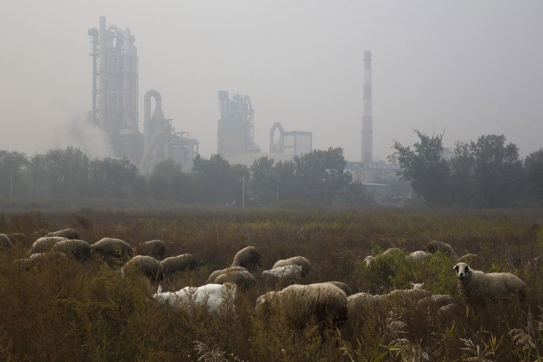 Sheeps graze on a grass land near a cement plant on the outskirts of Beijing, China, Saturday, Oct. 17, 2015. (AP Photo/Ng Han Guan)