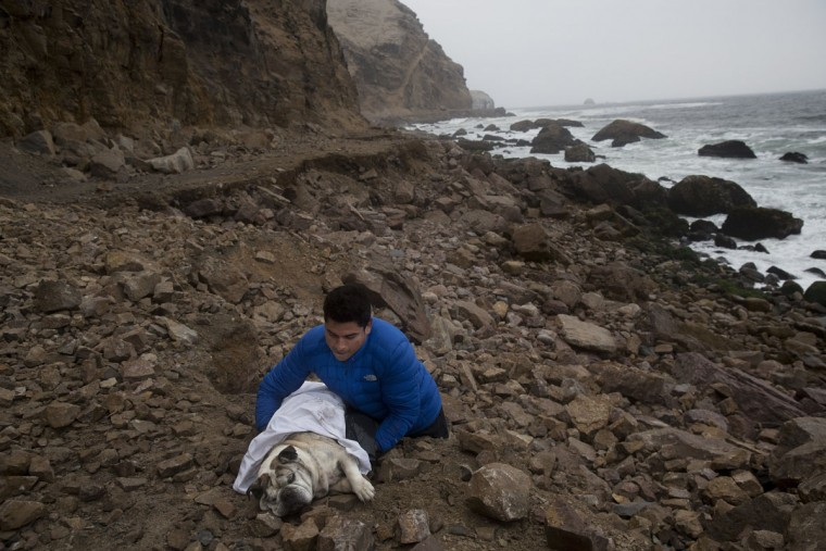 Jonatan Jimenez carries his dead dog Roco, for the sea to take his body away in La Herradura beach in Chorrillos, Lima Peru, Thursday, Oct. 15, 2015. According to Jimenez he used to always walk on the beach with Roco, so he wanted it to be his final resting place. (AP Photo/Rodrigo Abd)
