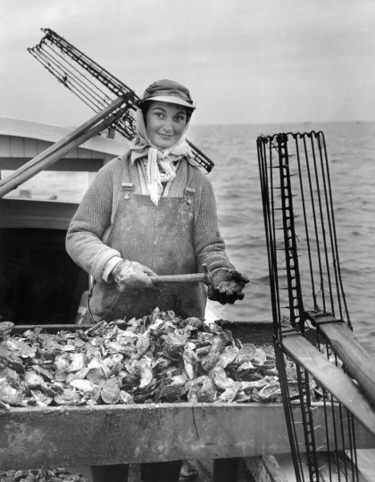 1957 - Mrs. Marguerite Creighton culls oysters aboard her husband's Honga River tonging boat. At the time almost 200 women regularly work with the fleet. (A. Aubrey Bodine/Baltimore Sun)