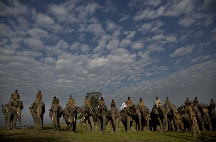 Elephants are lined up for tourists to ride at the Kaziranga national park at Kaziranga, northeastern Assam state, India, Sunday, Nov. 1, 2015. The park was reopened Sunday for tourists after its routine closure during the monsoon season. Assam is home to the world's largest concentration of rhinos. (AP Photo/ Anupam Nath)