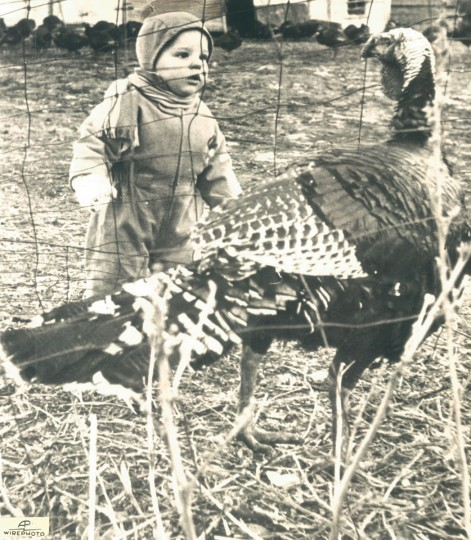 Randy Fischer might well be wondering if this 35-pound tom turkey will look as imposing on Thanksgiving. (AP Wirephoto, 1959)