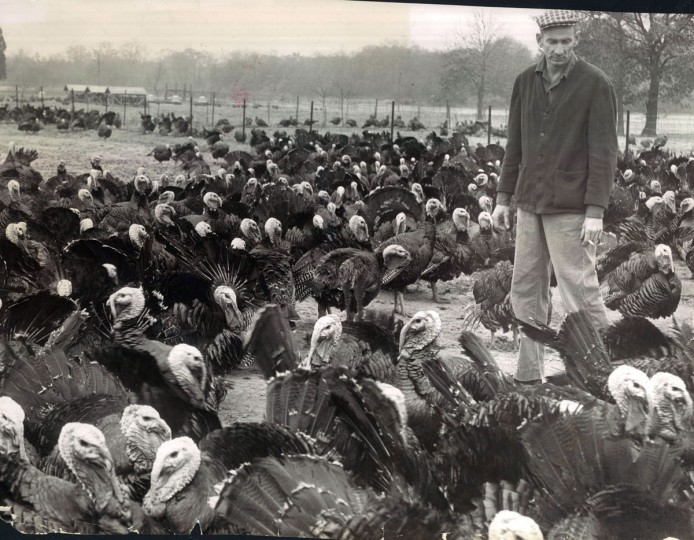 Bernard Woehlke on his turkey farm. (Joseph DiPaola/Baltimore Sun, 1959)