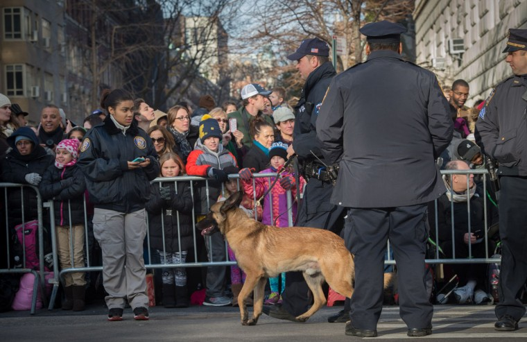 A police canine unit patrols during the Macy's Thanksgiving Day Parade, Thursday, Nov. 26, 2015, in New York. (AP Photo/Bryan R. Smith)