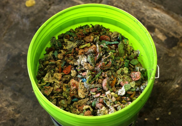"""Pieces of gum that were cleaned off of Seattle's famous """"gum wall"""" at Pike Place Market are shown in a bucket, Tuesday, Nov. 10, 2015. (AP Photo/Ted S. Warren)"""