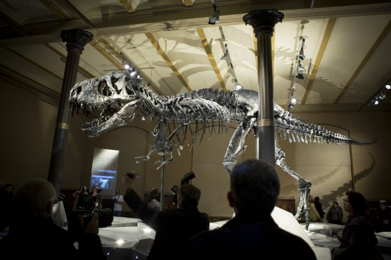 Members of the media stand around the skeleton of Tristan the Tyrannosaurus Rex during a media preview at the Museum fuer Naturkunde (Natural History Museum) on December 16, 2015 in Berlin, Germany. The skeleton, unearthed in the U.S. state of Montana in 2012, is among the best-preserved large dinosaur skeletons ever found. Tristan is approximately 66 million years old, is 12 meters long and is the first complete Tyrannosaurus Rex to ever be displayed in Europe. Tristan will be on exhibition at the Berlin natural history museum for the next three years. (Photo by Axel Schmidt/Getty Images)