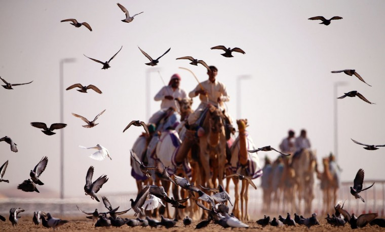 Emirati competitors take part in the Mazayin Dhafra Camel Festival in the desert near the city of Madinat Zayed, 150 kms west of Abu Dhabi, on December 19, 2015. (KARIM SAHIB/AFP/Getty Images)