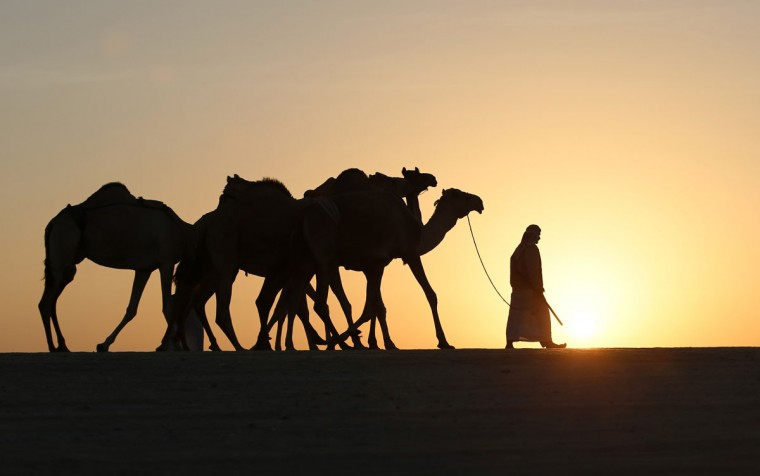 An Emirati man prepares camels for the Mazayin Dhafra Camel Festival in the desert near the city of Madinat Zayed, 150 kms west of Abu Dhabi, on December 19, 2015. (KARIM SAHIB/AFP/Getty Images)
