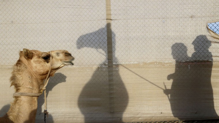 The shadow of Emirati men and their camel is seen on a fence during the Mazayin Dhafra Camel Festival in the desert near the city of Madinat Zayed, 150 kms west of Abu Dhabi, on December 26, 2015. (KARIM SAHIB/AFP/Getty Images)