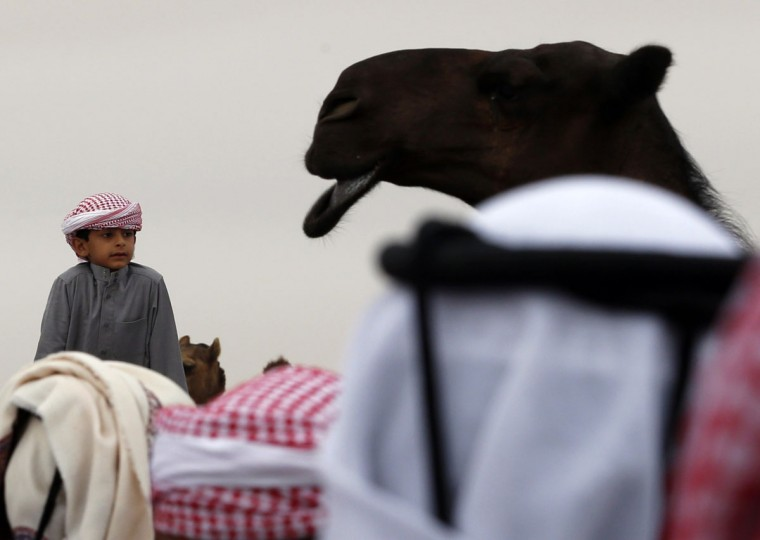 An Emirati child looks at a camel during the Mazayin Dhafra Camel Festival in the desert near the city of Madinat Zayed, 150 kms west of Abu Dhabi, on December 26, 2015. (KARIM SAHIB/AFP/Getty Images)
