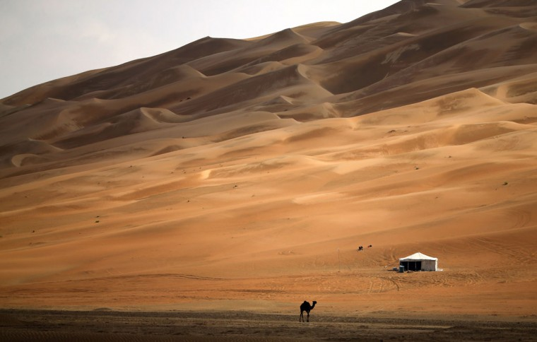 A picture taken on December 27, 2015 show a camel crossing the Liwa Oasis, southwest of the Emirati capital, Abu Dhabi, during the Dhafra Camel Festival. The festival, which attracts participants from around the Gulf region, includes a camel beauty contest, a display of UAE handcrafts and other activities aimed at promoting the country's folklore. (KARIM SAHIB/AFP/Getty Images)