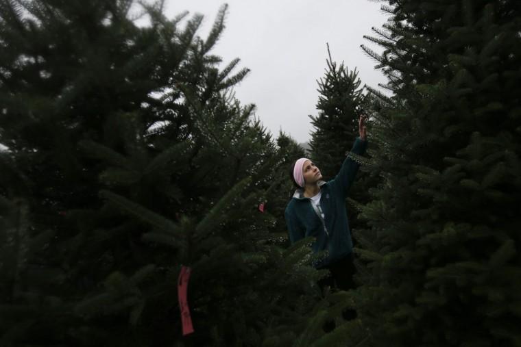 Ally Stang selects a Christmas tree at the John T Nieman Nursery, Saturday, Nov. 28, 2015, in Hamilton, Ohio. (AP Photo/John Minchillo)