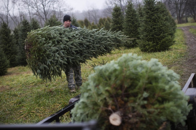U.S. Army Pfc. Daniel Hurst carries a Christmas tree towards a flatbed for transport at the John T Nieman Nursery, Saturday, Nov. 28, 2015, in Hamilton, Ohio. (AP Photo/John Minchillo)