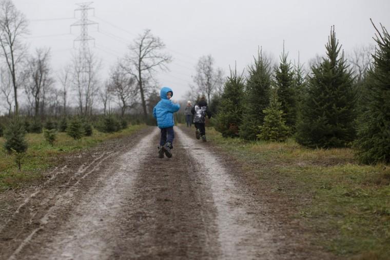 A young customer leads the a transport towards their Christmas tree at the John T Nieman Nursery, Saturday, Nov. 28, 2015, in Hamilton, Ohio. (AP Photo/John Minchillo)