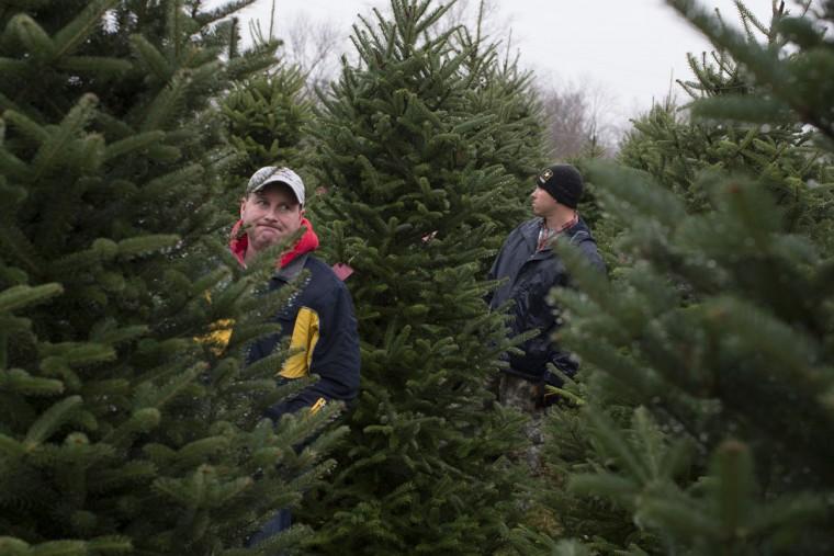 Tony Taylor, left, reacts as he browses Christmas trees at the John T Nieman Nursery, Saturday, Nov. 28, 2015, in Hamilton, Ohio. (AP Photo/John Minchillo)