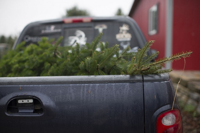 A freshly cut Christmas tree sits in the flatbed of a truck before its owners leave John T Nieman Nursery, Saturday, Nov. 28, 2015, in Hamilton, Ohio. (AP Photo/John Minchillo)