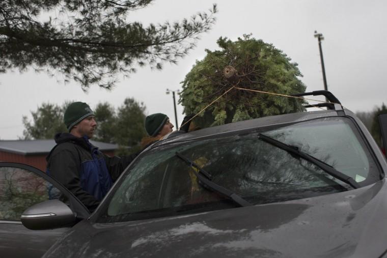 Workers tie a Christmas tree to the roof of a customers car at the John T Nieman Nursery, Saturday, Nov. 28, 2015, in Hamilton, Ohio. (AP Photo/John Minchillo)