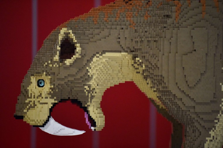 A model of a saber tooth tiger made from Lego is seen ahead of the Brick 2015 exhibition at the ExCel in London on December 10, 2015. (BEN STANSALL/AFP/Getty Images)