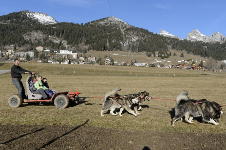 A musher with his dog-sled competes on a green field without snow in the Swiss Alps during Christmas in Leysin, Switzerland, Thursday Dec. 24, 2015. (Laurent Gillieron/Keystone via AP)