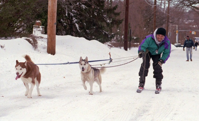 Darryl Burnett, of Baltimore, enjoys a day of skiing with the help from his two Siberian huskies named Dallas, left, and Chedai. (Kenneth K. Lam/Baltimore Sun)