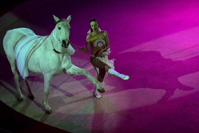 A member of the Russian Family Urunov performs with a horse at the Capital Circus during the 11th edition of the International Circus Festival on January 7, 2016 in Budapest. The festival takes place from January 7 to 11, 2016. (ATTILA KISBENEDEK/AFP/Getty Images)