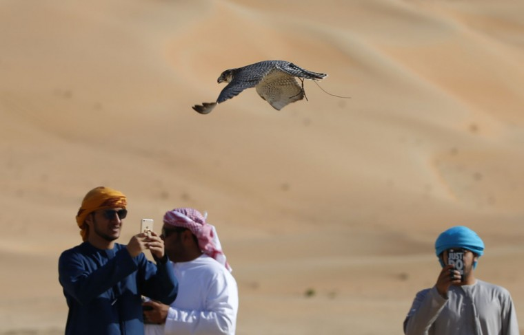 Emirati falconers take pictures as they train their birds on January 6, 2016, during the Liwa 2016 Moreeb Dune Festival in the Liwa desert, some 250 kilometers southwest of Abu Dhabi. (KARIM SAHIB/AFP/Getty Images)