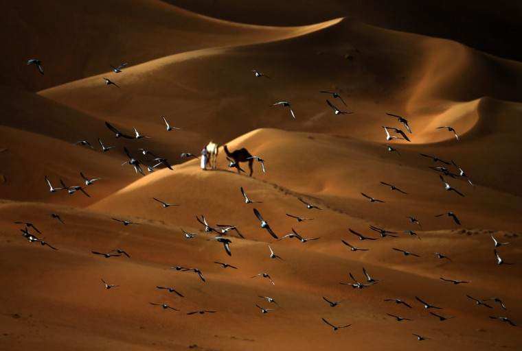 Pigeons fly over the Liwa desert, 250 kilometers west of the Gulf emirate of Abu Dhabi, during the Liwa 2016 Moreeb Dune Festival on January 5, 2016. (KARIM SAHIB/AFP/Getty Images)