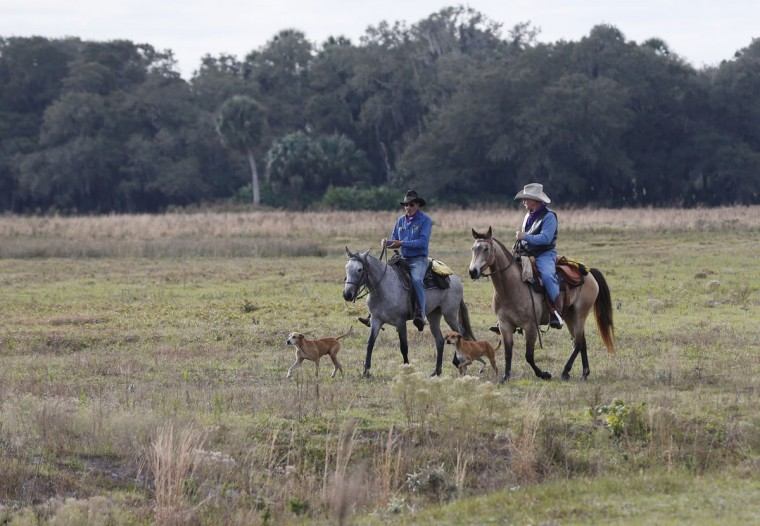 In this, Tuesday, Jan. 26, 2016 photo, a pair of riders head to the start during the second day of the Great Florida Cattle Drive 2016, in Kenansville, Fla. (AP Photo/Wilfredo Lee)
